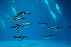 繁殖に成功した水族館
