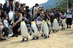 ペンギンパレード!!