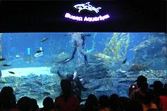 韓国最大級の水族館「釜山アクアリウム」と姉妹館協定を締結