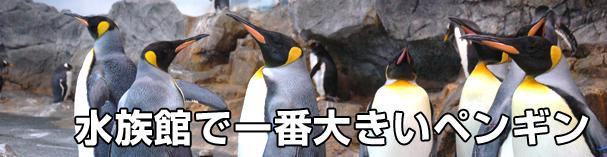 水族館で一番大きいペンギン